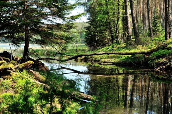 Spływ rzeką Biebrza - nurkowanie z sumami