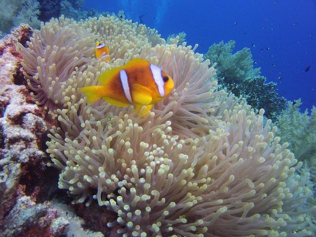 Marsa Alam nurkowanie - weekend majowy