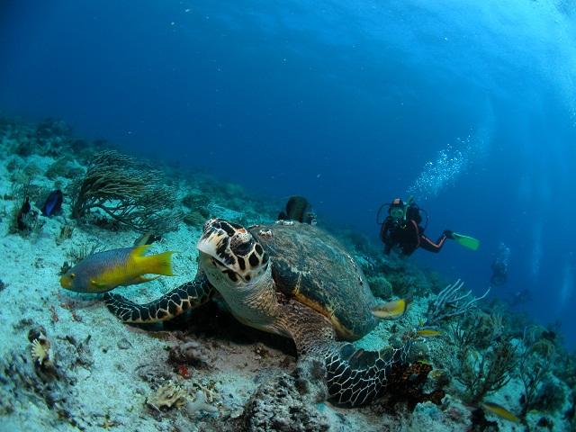 Nurkowanie Meksyk Jukatan