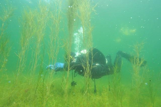 Mazury cud natury - nurkowanie