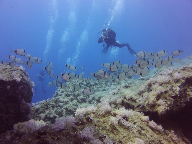 Best Divers