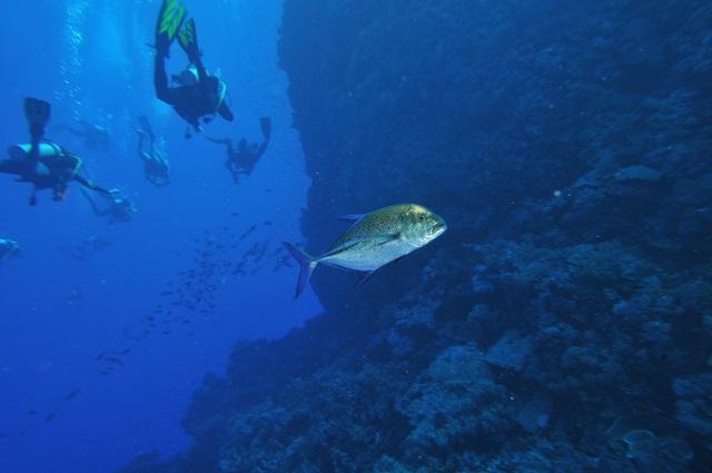 Wyprawy nurkowe - Brothers Islands i Daedalus Reef