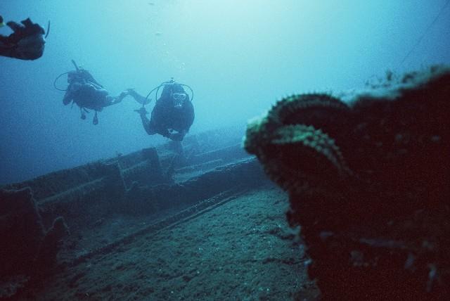 Wyprawy nurkowe - Dokowiec - Dugi Otok