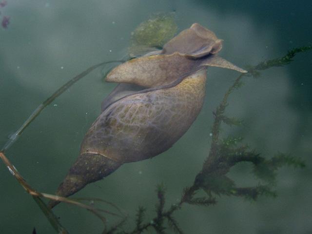 Wyprawy nurkowe - jezioro Pile