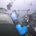 nurkowania-podlodowe-hancza-08