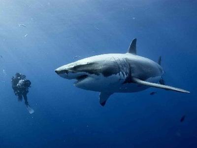 Rekiny - bać się czy podziwiać?
