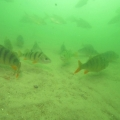 jezioro płotki3