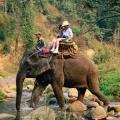 slonie_1