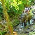 slonie