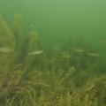 jezioro mojtyny 15