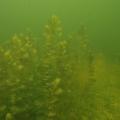 jezioro mojtyny 5