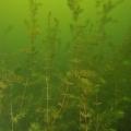 jezioro mojtyny p7