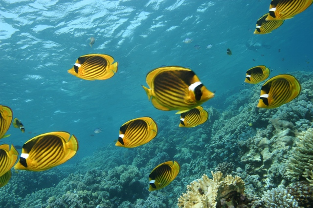 Szkolenia nurkowe - podwodny przyrodnik