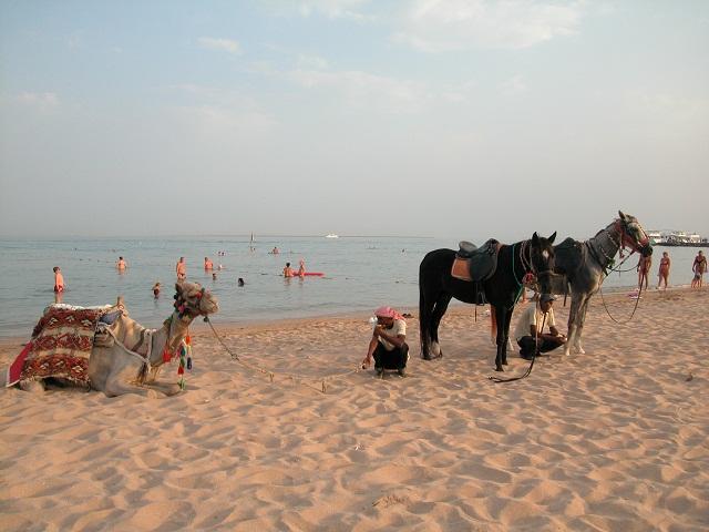 Wyprawy nurkowe - Safaga