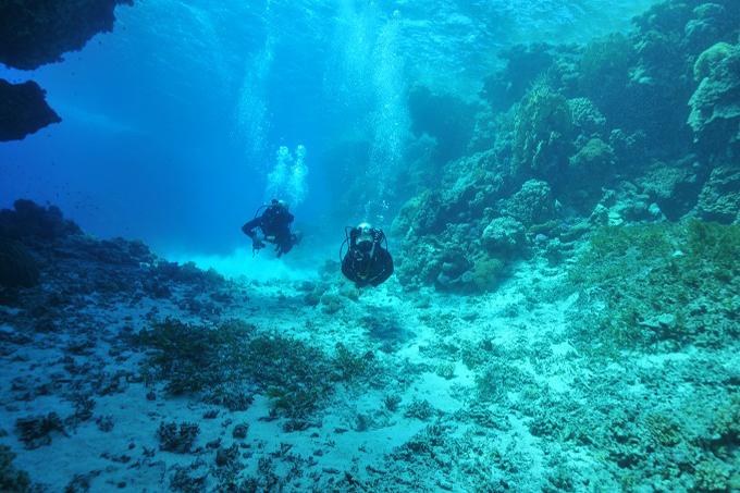 Wyprawy nurkowe - Hamata
