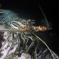 wyprawy-nurkowe-malediwy-17