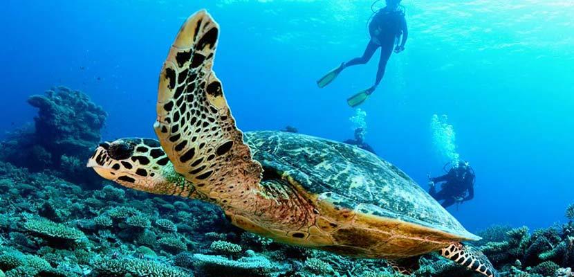Wyprawy nurkowe - Malediwy