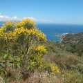 wyprawy-nurkowe-wyspy-toskanskie-07