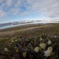 Arktyka_Spitsbergen_2017_71