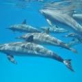 delfinynurkowanie1