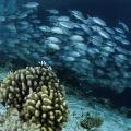 wyprawy-nurkowe-malediwy-19
