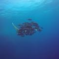2017_Egipt_Daedalus & Brothers Islands_10