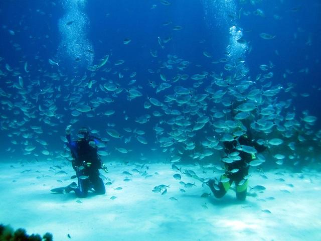 Nurkowanie wyspa Gozo