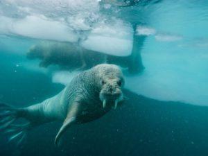 spitsbergen-nurkowanie-11