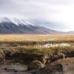 spitsbergen-nurkowanie-19