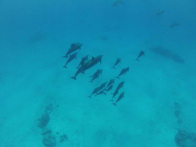 Safari nurkowe rafy St.Jones, Daedalus i Fury Shoals