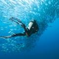 morze_czerwone_diving