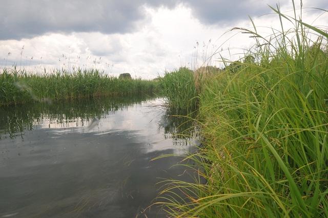 Wyprawy nurkowe - rzeka Łyna