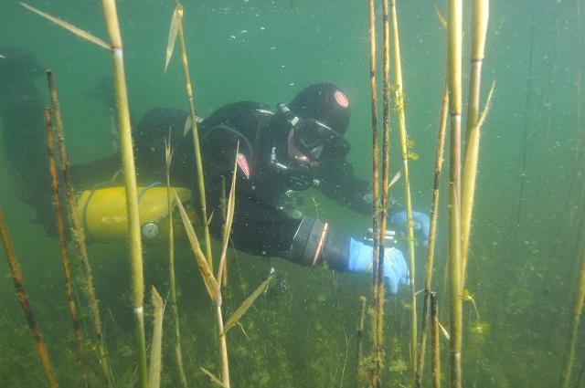 Wyprawny nurkowe - Jezioro Żbik