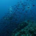 podwodne_08