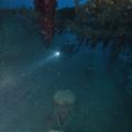 wyprawy-nurkowe-rosaliemoller-18