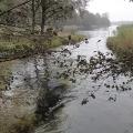 wyprawy-nurkowe-rospuda-05