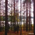 jezioro rekowica