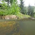 nurkowanie w rzece krutynia  6