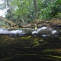 nurkowanie w rzece krutynia 10