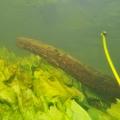 nurkowanie w rzece krutynia 11