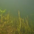 nurkowanie w rzece krutynia 13