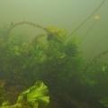 nurkowanie w rzece krutynia 17
