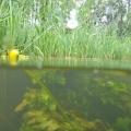 nurkowanie w rzece krutynia 19