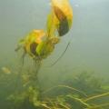 nurkowanie w rzece krutynia 20