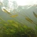 nurkowanie w rzece krutynia 24