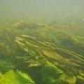 nurkowanie w rzece krutynia 27