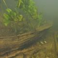 nurkowanie w rzece krutynia 3