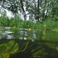 nurkowanie w rzece krutynia 4