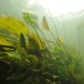 nurkowanie w rzece krutynia 8