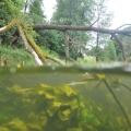 nurkowanie w rzece krutynia16